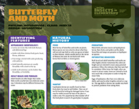 Insect Fact Sheet | Elementary Teaching Resource