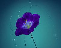 Flower's tears