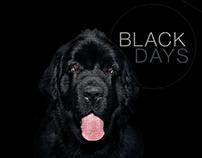 Black Days Tarjeta Éxito