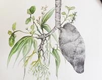 Mi Herbario