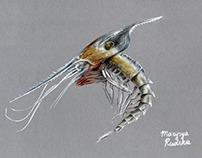 Microscopy and plankton