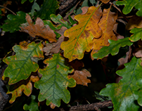 Autumnal palette...