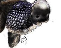 Black Crown Pearlscale