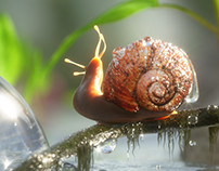 The Snail and the Giant Bubble