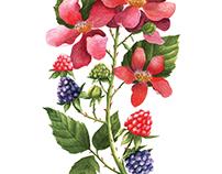 Botanical experiments