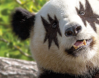 Panda - Wit&Fun