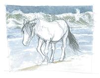 Marine Themed Watercolor Illustrations