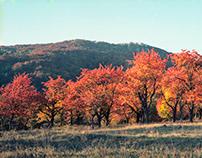 Autumn in Cherry orchard