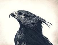 Falcon / Impak The hum ep
