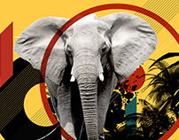 Poaching: Illegal Ivory Trade Documentary
