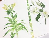 Lily flower | Цветок лилии