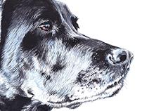 Dog portrait - Pet illustration- watercolor