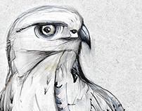 Buteo Rufinus | Birds of Lesvos island