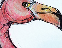 Flamingo - sketch during lunchtime