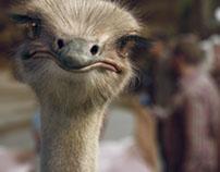Molto Ostrich TVC