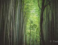 Green Kyoto