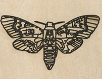 Moths - Illustration and Application module