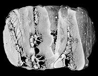 Epizootics Textures