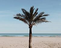 Palm trees & Sunrises