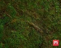 Forest Ground Texture 01