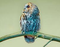 Andy Lo Po, Owls