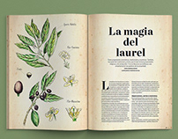 Ilustración editorial Botánica, Botany Illustration
