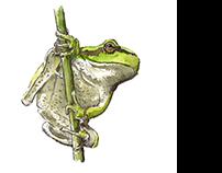 Animal watercolor