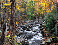 Tremont - Great Smoky Mountains