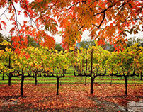 Autumn in Napa Valley, Ca 2016