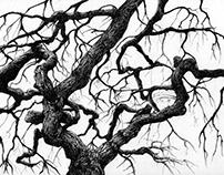 Japanese Maple - Tree 1