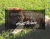 Keeping Your Cat Safe in a Heat Wave
