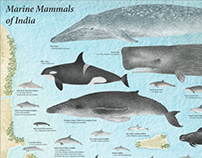 Marine Mammals of India