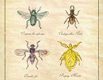 Carpenter Bee, Beetle, Oscinella Frit and Praying Manti