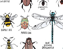 Entomology Illustration