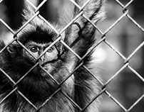 In a cage // Animals at the zoo