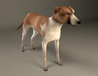 street dog model
