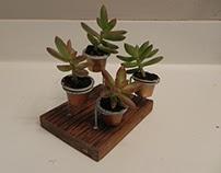 Succulents planted in Nespresso capsules