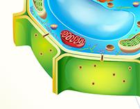 Ilustración Científica. / GRUPO EDITORIAL SM