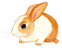 Inspiració natural: conillet