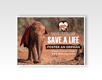 DSWT - Foster Card