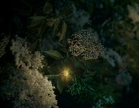 Rajec Světlušky