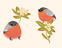 Finch patterns