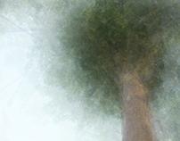 Road-tree-01