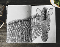 Zebra • Illustration