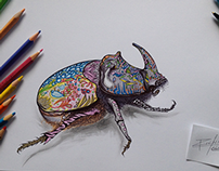 Crazy and colorful beetle