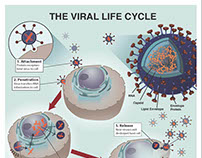 The Viral Life Cycle