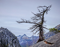 THE ENCHANTMENTS -- At the Edge