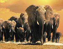 Discovery Channel Pictures - Africa's Elephant Kingdom