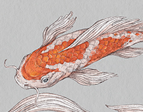 Koi fish illustrations