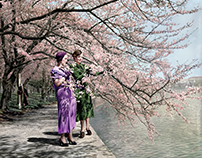 Japanese Cherry Blossoms Bloom in D.C, 1935.
